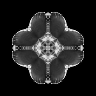Mitosis 2 fine art