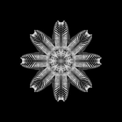 Mitosis 3 - fine art